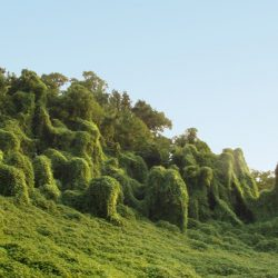 Stress: Kudzu of the Spirit